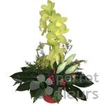 Nos confections Composition cymbidium